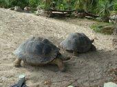 200812923_bgalapagos_tortoise